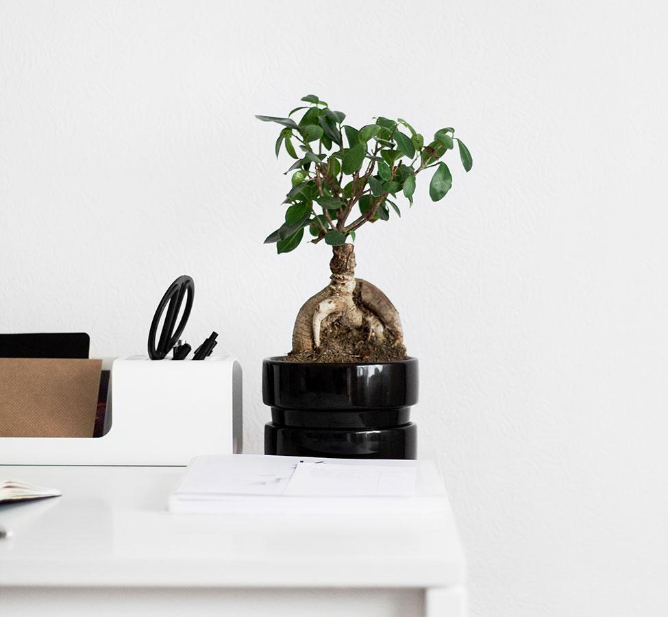 L 39 effetto delle piante negli ambienti indoor officebit - Piante da ufficio resistenti ...